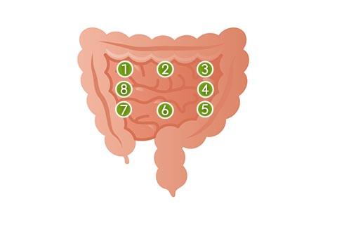 小腸のマッサージのやり方