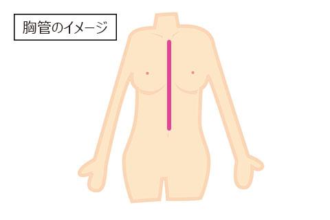 胸管のイメージ