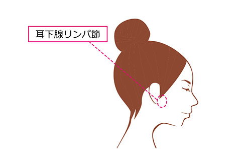 耳下腺リンパ節の場所
