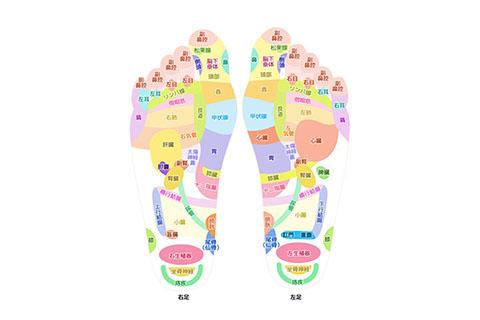足裏の反射区イメージ図