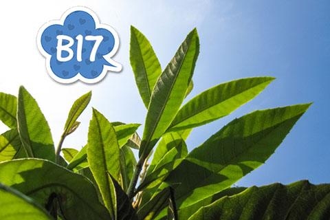 びわの葉の効果効能!びわの栄養ビタミンB17の癒しの力!