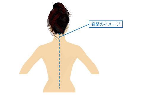 脊髄のイメージ