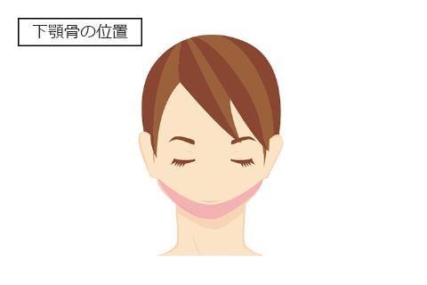 顎が伸びる理由(顎の骨)