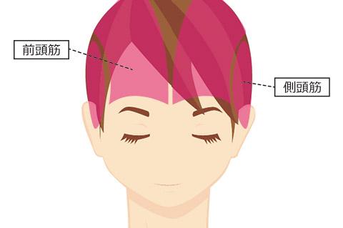 目の下のたるみの原因:前頭筋・側頭筋