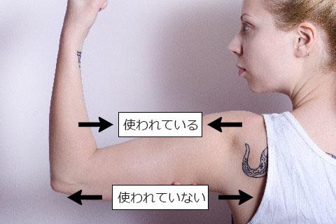 筋肉の拮抗関係について