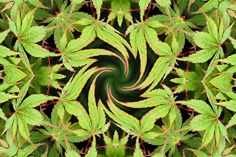 ヘンプオイルの効能!麻の実オイルは栄養豊富で美容効果抜群
