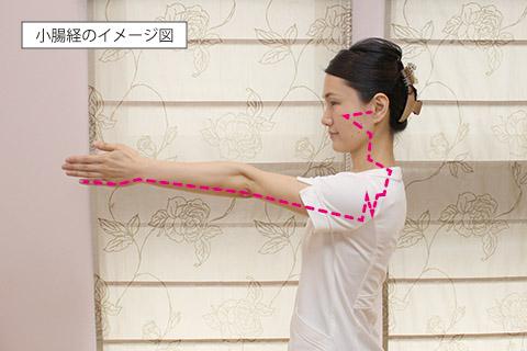 小顔に効果的なツボ・経絡:小腸経