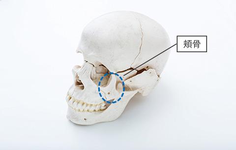 頬骨の場所