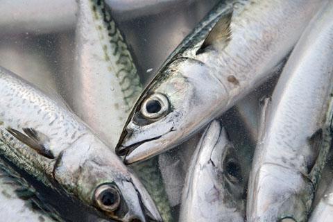 美白に良い食べ物 魚