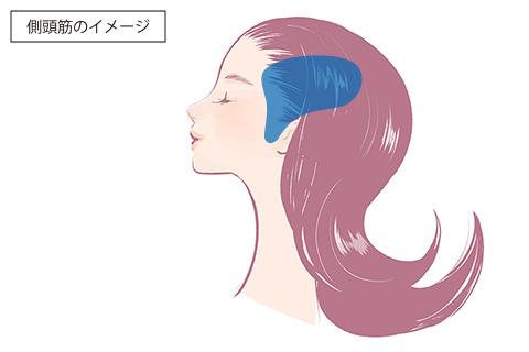 側頭筋のイメージ