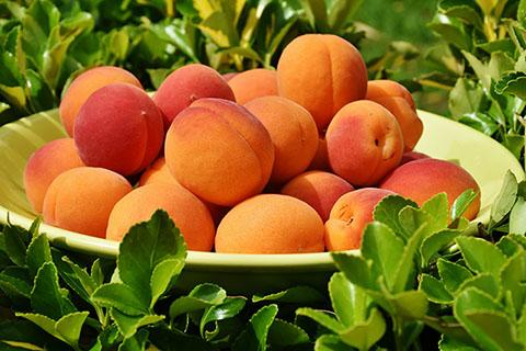 アプリコットオイルは杏仁豆腐の香り?杏のオイルの効能とは