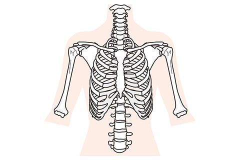肋骨のイメージ