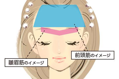 前頭筋・皺眉筋のイメージ