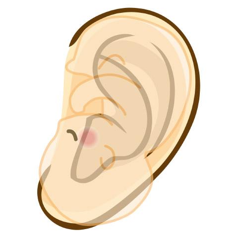耳つぼの場所