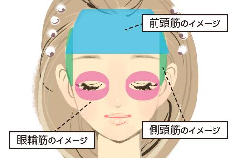 顔の筋肉のイメージ