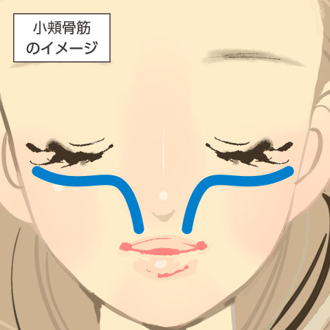 小頬骨筋のイメージ