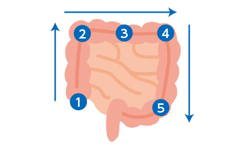 腸もみのやり方(大腸)