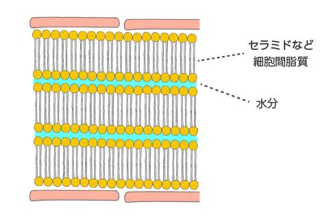 ラメラ構造について