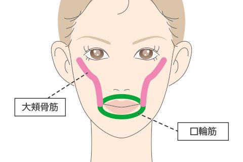 頬のたるみと大きく関係する表情筋のイメージ