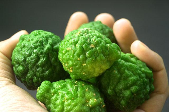 ベルガモットの効能は?オールマイティな効能の柑橘系アロマ