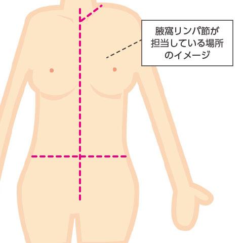 腋窩リンパ節が担当している場所